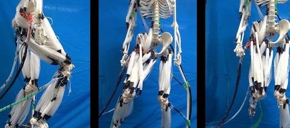 Японци създадоха робот с живи мускули